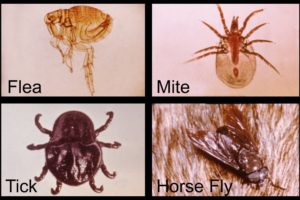 Vector-Borne Diseases – What You Should Know