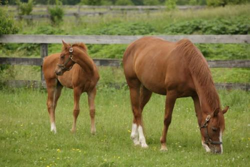Mare and FoalHome